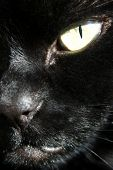 close up view of my cat (zombie). included a clipping path for the eye, so you can easily change the colour of the eye. this is actually the real colour. poster