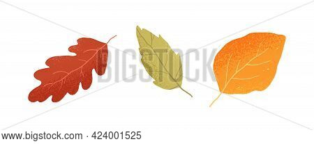 Dry Autumn Leaves Of Oak, Ash And Birch Trees Of Different Colors. Top View Of Fall Tree Leaf. Gold,