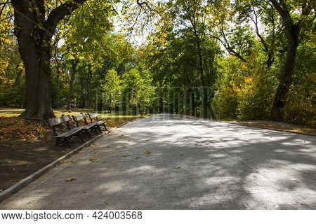 A Big Tree And A Bench In An Autumn Park. The Path With The Bench Near The Tree In Park. Walk In The