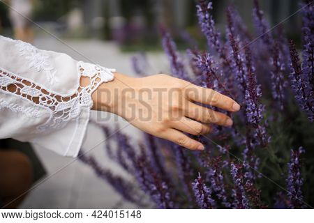 Woman\'s Hand Touching Lavender, Feeling Nature. Closeup Womans Hand Strolling Through Lavender Flow