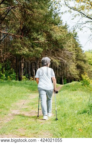 Outdoor Nordic Walking. Senior Woman Walking In A Pine Forest On A Summer Day, Rear View. An Active