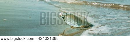 closeup of a glass reusable water bottle on the seashore of a lonely beach, in a panoramic format to use as web banner or header