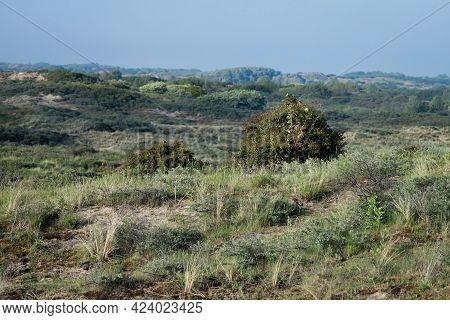 Sandy Dunes, Grass, Bushes And Biking Paths, Netherlands