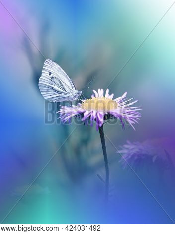 Beautiful Green Nature Background.Floral Art Design.Macro Photography.Floral abstract pastel background with copy space.Butterfly and Floral Field.Butterfly in Summer Floral Background.Beautiful Butterfly on a Flower.Creative Artistic Wallpaper.