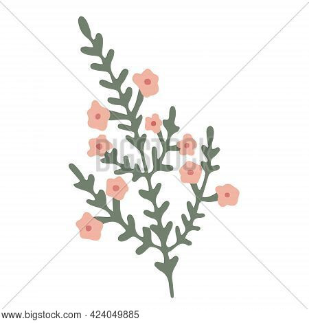 Green Blooming Branch With Small Pink Flowers. Hand Drawn Vector Illustration Isolated On White. Wil