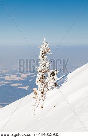 Untersberg Summit.  A Small Snow Covered Tree Viewed From The Summit Of Untersberg Mountain In Austr