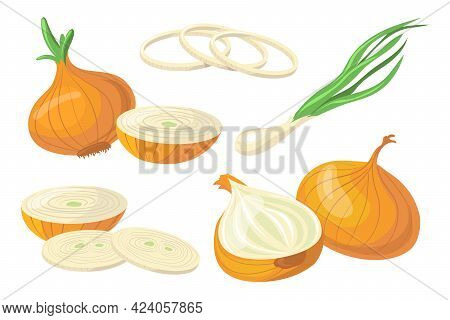 Set Of Colorful Onions. Cartoon Vector Illustration. Fresh Vegetable In Different Forms As Whole, Un