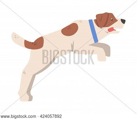 Jack Russell Terrier Jumping, Cute Pet Animal With Brown And White Coat Cartoon Vector Illustration