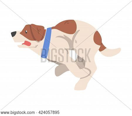 Funny Jumping Jack Russell Terrier, Cute Pet Animal With Brown And White Coat Cartoon Vector Illustr