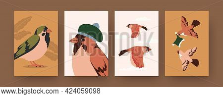 Set Of Contemporary Art Posters With Sparrows And Winter Caps. Bird Wearing Hat Cartoon Vector Illus