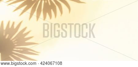 Leaf Shadow Summer Background. Plant Leaf Shadows On White Wall In Abstract Tropical Sunlight Textur