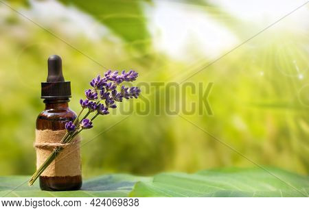 Lavender And An Essential Oils Bottle And Blurry Green Background.