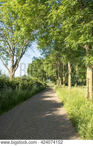 Walkway Lane Path With Green Trees In Forest. Beautiful Alley, Road In Park. Way Through Summer Fore