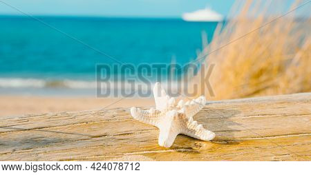 closeup of a starfish on an old washed-out tree trunk on the beach, with the sea and a ship in the background, in a panoramic format to use as web banner or header