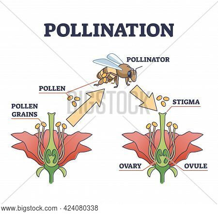 Pollination As Plant Reproduction And Vegetation Process In Wildlife Outline Diagram. Educational La