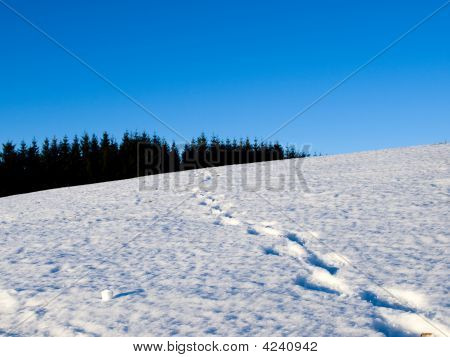 Human Footsteps In The Snow
