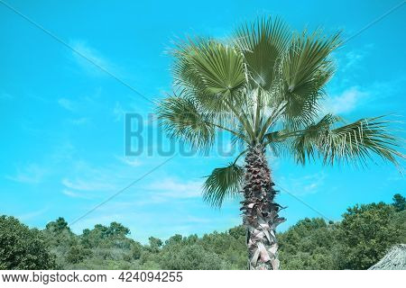 Beautiful View Of Palm Tree Outdoors On Sunny Summer Day. Stylized Color Toning