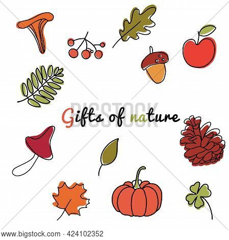 Autumn Forest Collection Of Pumpkin, Bump, Maple,oak Leaves,chanterelle Mushrooms,plants,acorns And