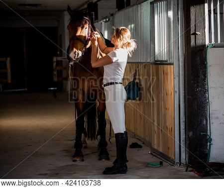 Beautiful Woman Adjusts Bridle Of Her Horse In Stable In Summer In Rays Of The Sunset. Horse Obedien