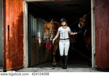 Young Athletic Woman In Riding Clothes Takes Two Horses Out For Horse Ride From Stable.they're All H