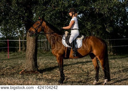 Young Rider In Helmet And White Sports Uniform On Horse Against The Background Of Trees Onsummer Eve