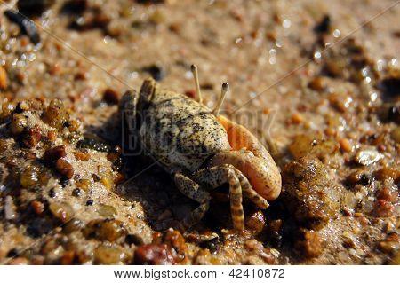 Single-clamp Crab