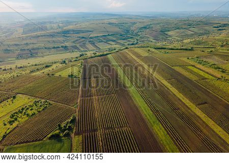 Aerial View Of Agricultural Lands With Vineyards. High Quality Footage. Countryside Italy, Vineyards