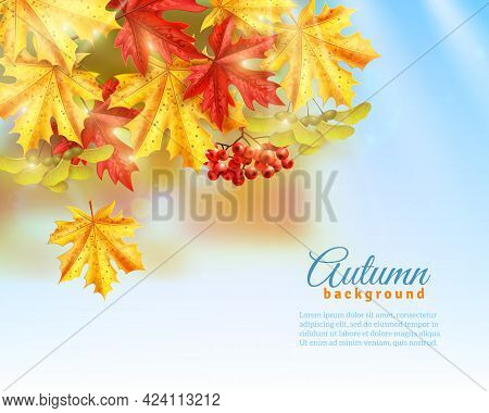 Light Blue Background With Light Effects Shadows And Colorful Autumn Leaves And Rowan Flat Vector Il