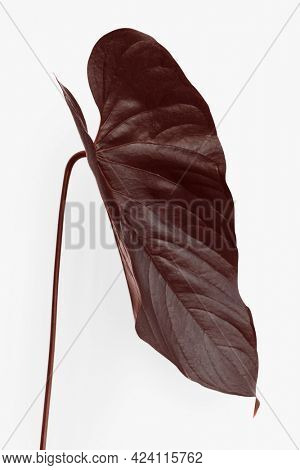 Tropical Alocasia leaf painted in a dark brown