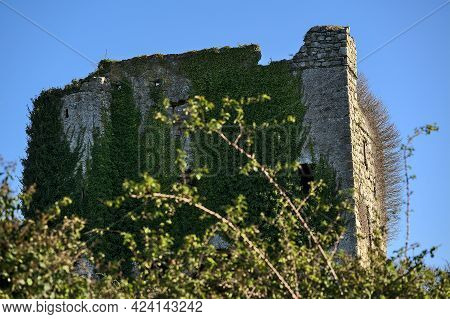 Beautiful Closeup View Of The Mysterious Puck's Castle Ruins Covered With Ivy (hedera Helix) In Rath