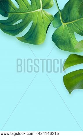 Green Palm Leaf On A Blue Background. Exotic Concept.