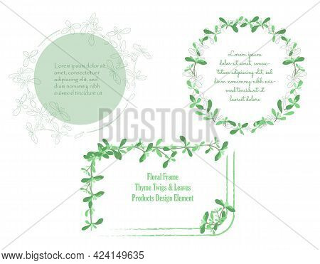 Set With Frames Made Of Hand Drawn Thyme Leaves. Traditional Symbol Of Victory. Outlined With Brushe