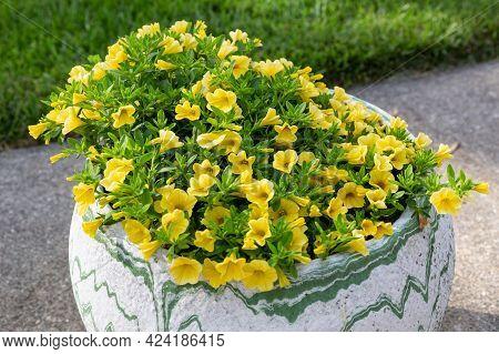 A Flower Pot Full Of Yellow Million Bells Flowers