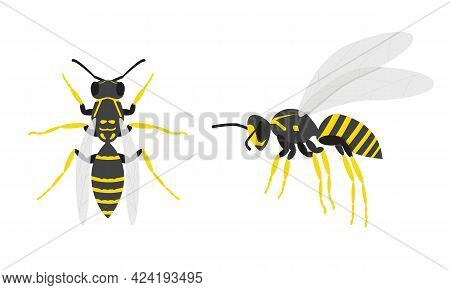 Wasps. A Set Of Two Insects. Top And Side View.