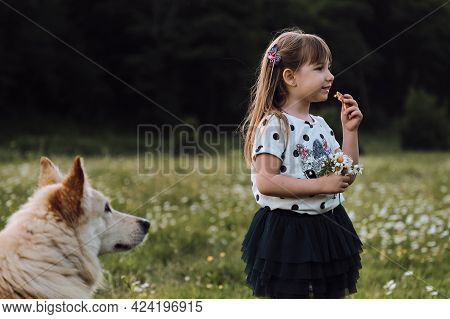 Little Five Year Old Girl With Beautiful Long Hair And Dress Is Standing In Chamomile Field Eating C