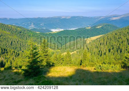 Coniferous Forest On The Steep Hill. View In To The Distant Valley With Fog And Svydovets Ridge Bene