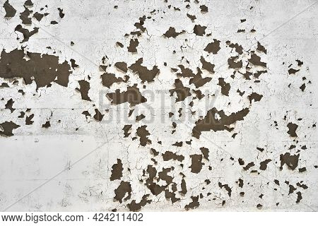 White Paint Peels And Cracks Off Of A Plaster Wall In Large Pieces. White Paint Peels Off Of An Exte