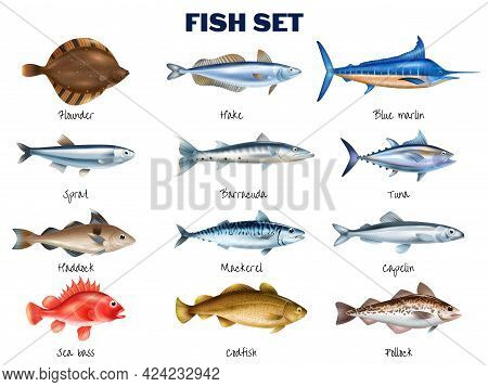 Sea Fish Realistic Set With Different Fish Species Symbols Isolated Vector Illustration
