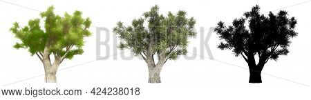Set or collection of Olive trees, painted, natural and as a black silhouette on white background. Concept or conceptual 3d illustration for nature, ecology and conservation, strength, endurance