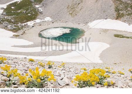 View Of Isatis Allioni Wild Apennines Flowers In The Famous Lago Di Pilato, National Park Of Monti S