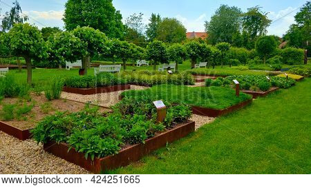 Tiny Herb Garden With Many Different Kinds Of Herbs In The Beautiful Green Park. There Are Tiny Tree