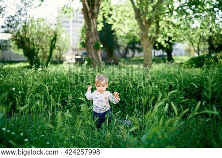 Kid Is Kneeling In The Tall Grass Among The Green Spikelets