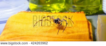 Spider Walking On Laundry Shelf, Beware Of Venomous Animals, Need For Detection