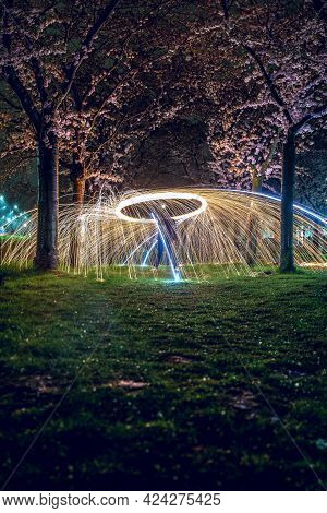Sparkling Fireworks In City Park With Blooming Cherry Blossom Avenue