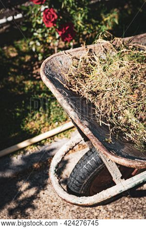Top View Of Metal Wheelbarrow With Cut Dry Grass And Tree Branches In The Garden. Cleaning And Carin