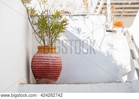 Handmade Old Amphora With Fresh Green Plant Background Sifnos Island, Greece.