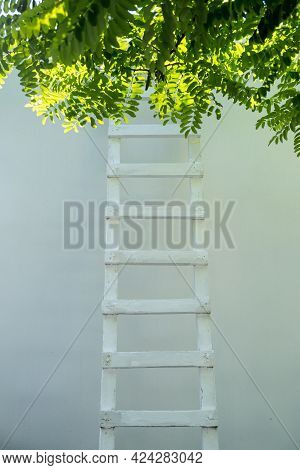 Ladder Leaning Against A Wall, Tree Foliage On The Upper Part