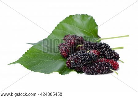 Isolated Mulberry. Organic Mulberry Fruits With Green Leaves Isolated On White Background. With Clip