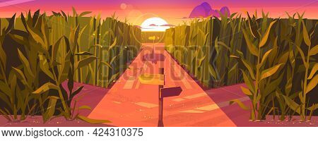 Cornfield Sunset Landscape With Wooden Road Pointers And High Green Plants. Choice Of Way Concept Wi