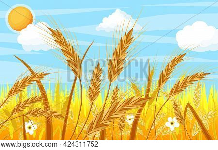 Wheat In The Fields. Nature Landscape With Ear Harvest. Whole Stalks, Wheat Ears Spikelets With Seed